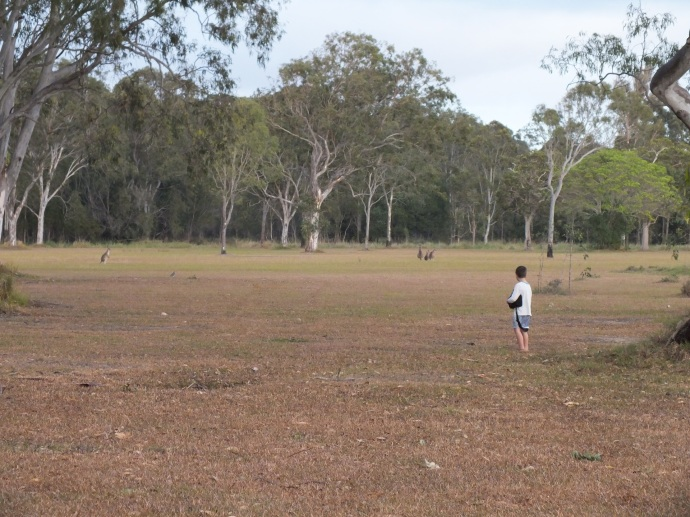 Heaps of Kangaroos all over the campground
