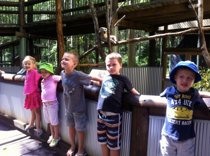 Daisy Hill Koala Sanctuary