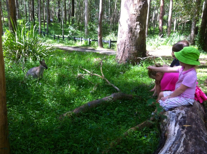Kids trying to get the Wallaby to come closer