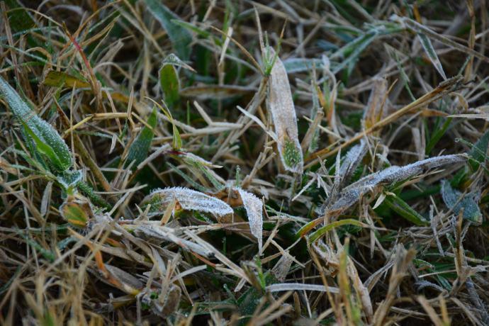 Brrrr - frost!