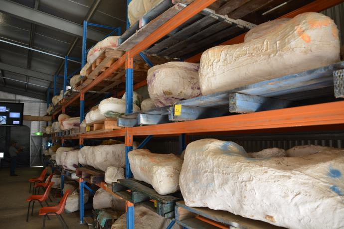 Dinosaur bones in their 'jackets' waiting to be processed