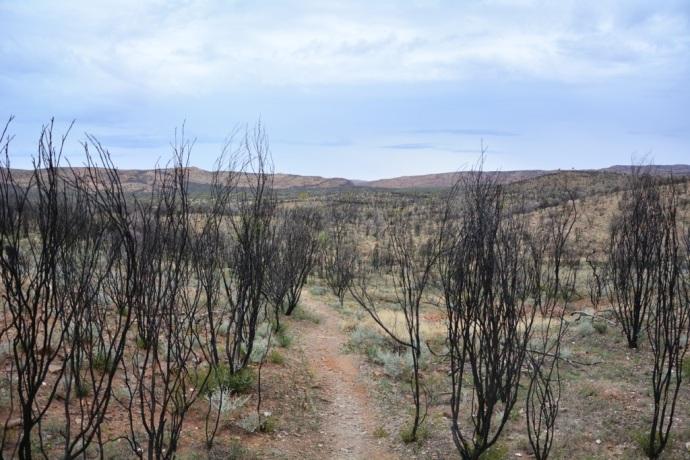 East MacDonnell Ranges - Arltunga