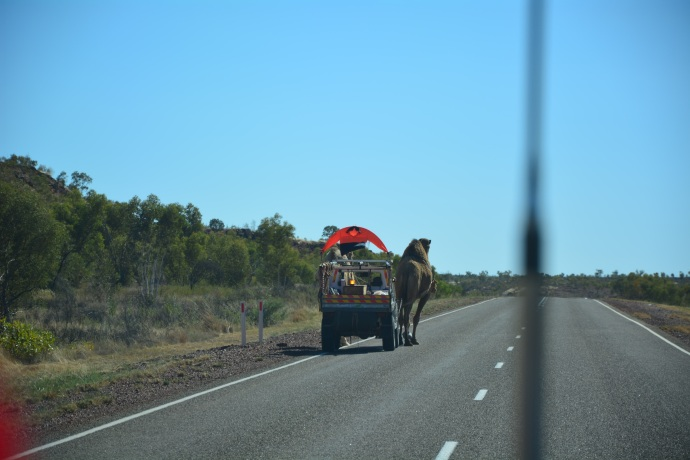 Klaus Menzel and his camels - they got further than we did in 3 days!