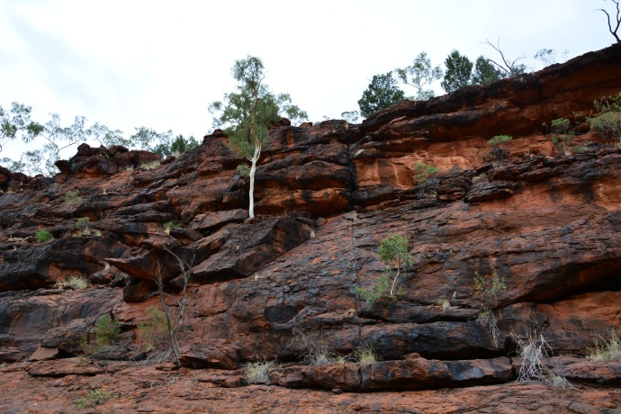 Toby Spotted the rare black footed rock wallaby.... can you see it? It's right there... see....