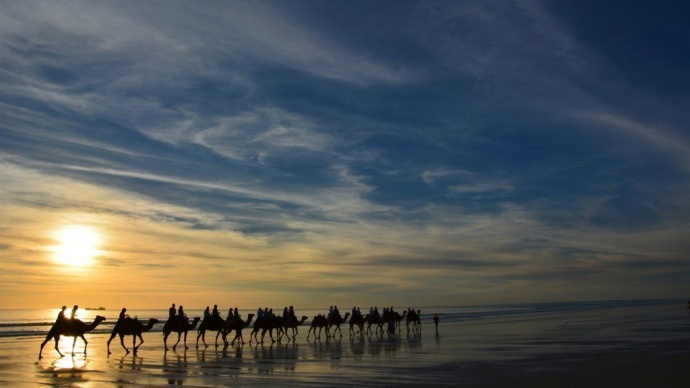 The camels on the beach at sunset really are beautiful