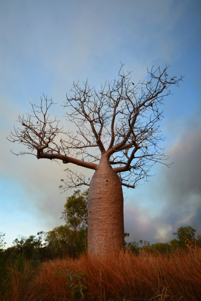 I had Matt taking photos of Boab Trees all over WA for me - I think this one is the pick of them!