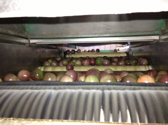 Our first run of passionfruit through the polishing machine