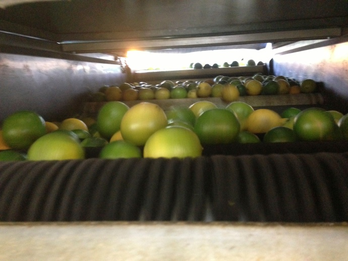 Then the limes turn