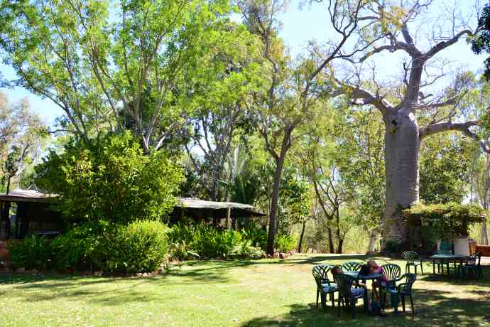 Such a lovely green, shady and cool spot for scones and a cold drink!