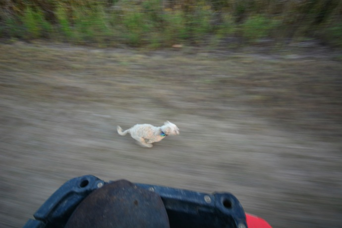 Jerry racing the four wheeler - he loves the farm life!