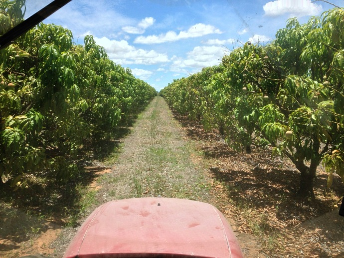 View from the tractor!