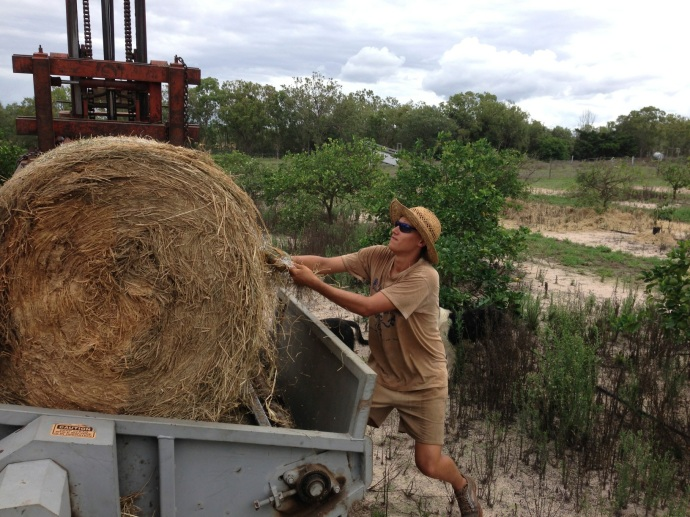Malte hard at work pulling the string off the bales