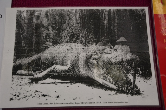 Pictures of enormous crocodiles in the information centre