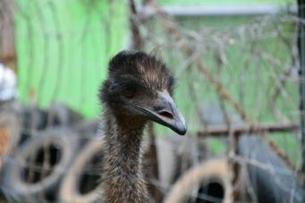 Hello Emu!