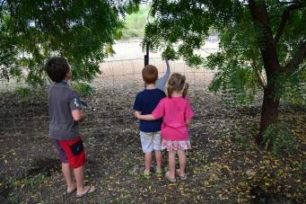 Kids checking out a Brolga type bird