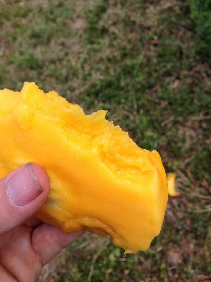 Mangos for lunch and dinner and in between too!