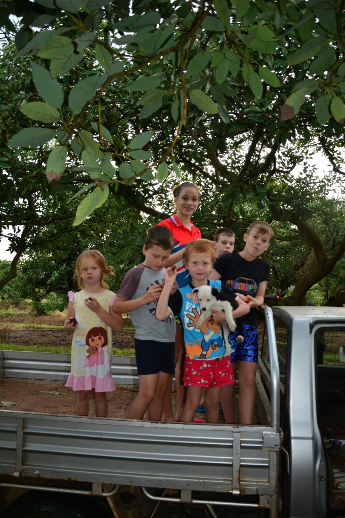 Off in the ute to search the Orchard for the Easter Bunny's cleverly hidden stash!