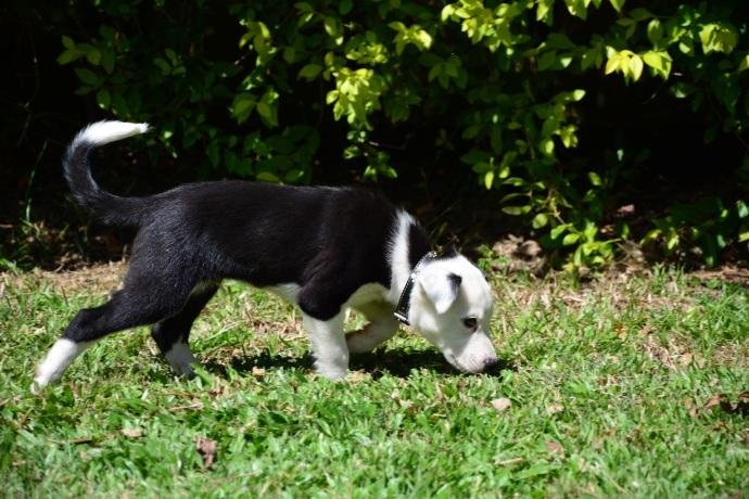 Beau 8 Weeks old now