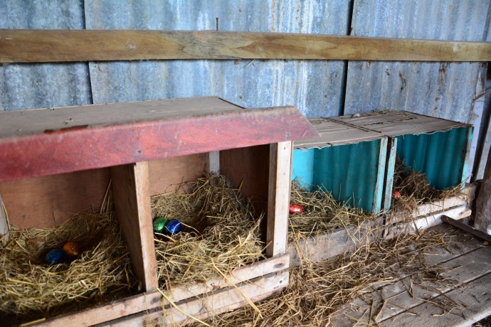 The chooks always lay chocolate eggs at Easter!