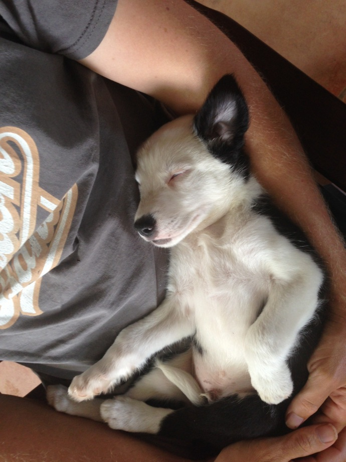"""Our new pup - 'Beau"""""""