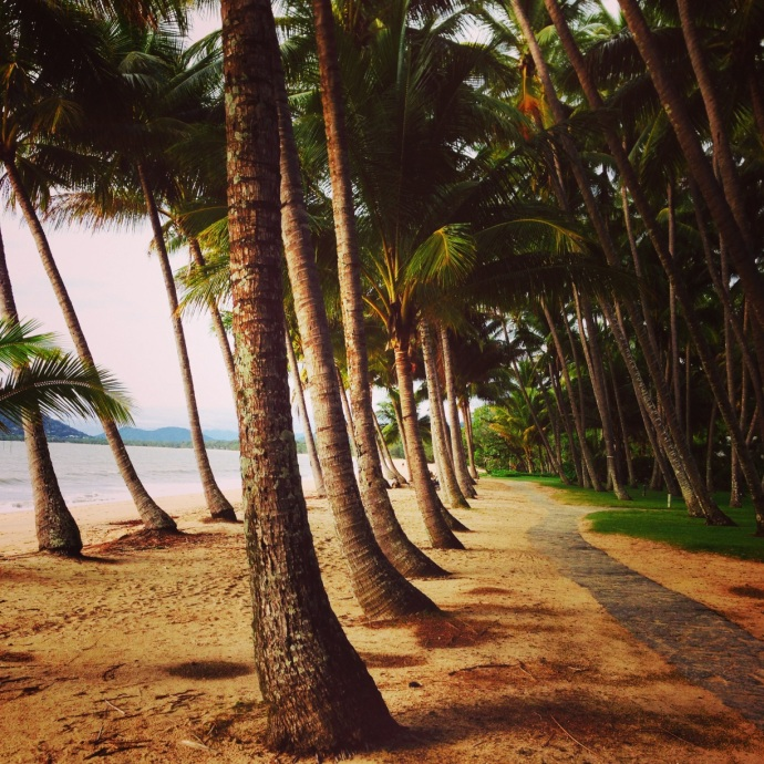 Palm Trees at Palm Cove